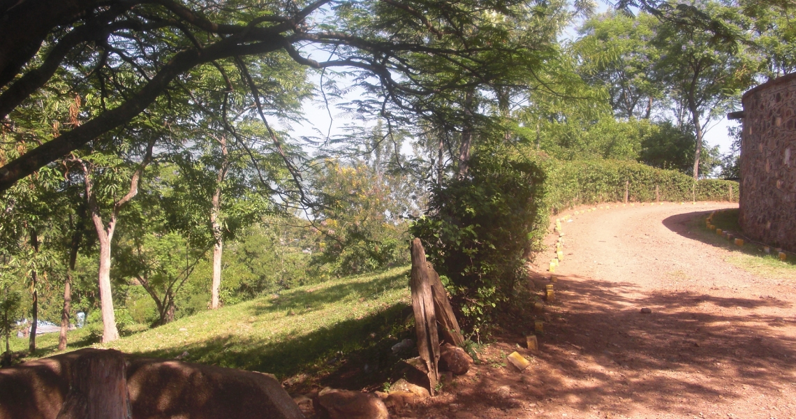 Homa Bay - The forest