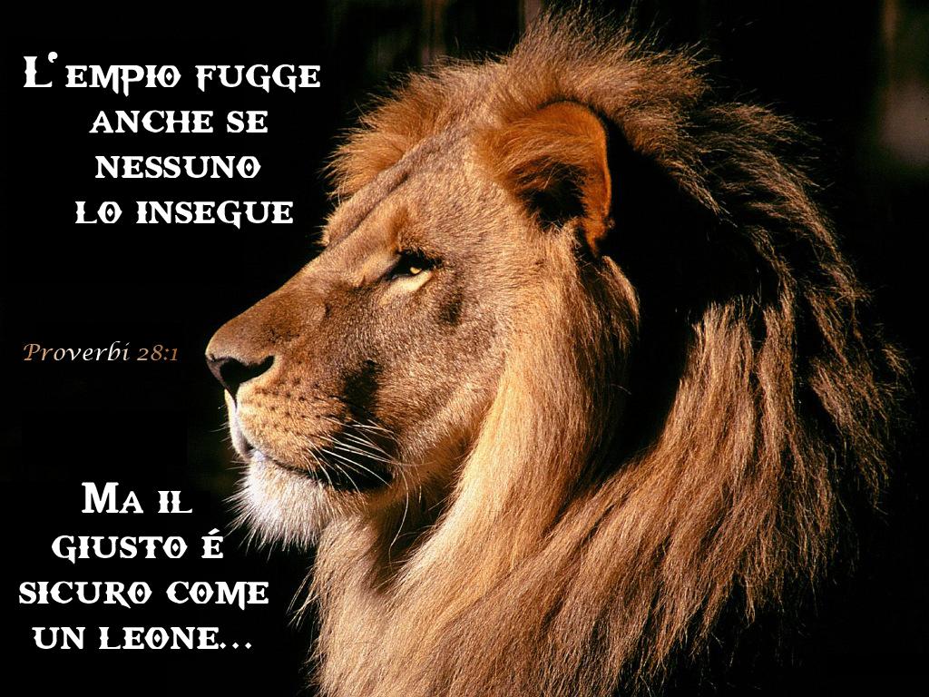 Il leone for Sfondi leone